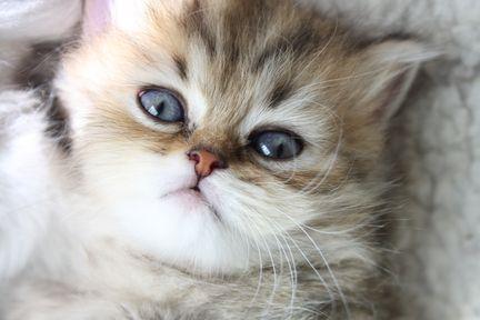 Miniatures, toy, teacup cats